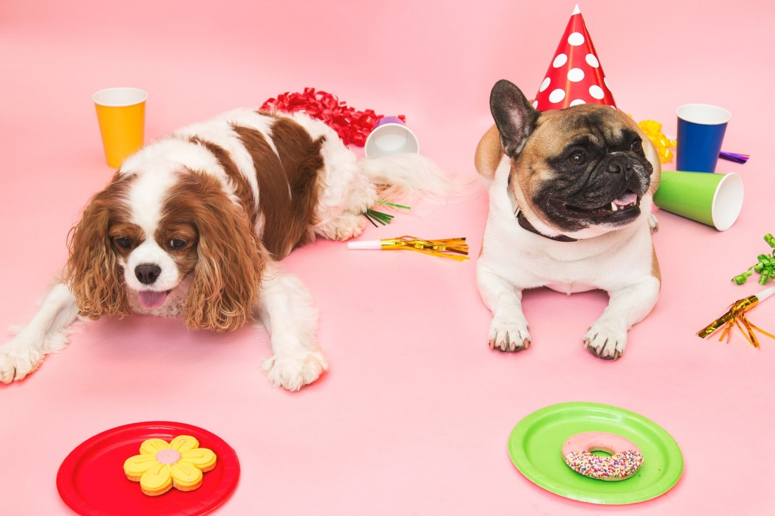two small dogs, one wearing a party hat, are sitting amongst party decorations and plates of treats